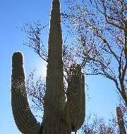 Desert Hiking Gear List
