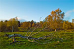 Autumn in Cairngorms National Park, Scotland - 5