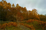 Autumn in Cairngorms National Park, Scotland - 6