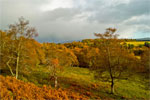 Autumn in Cairngorms National Park, Scotland - 8