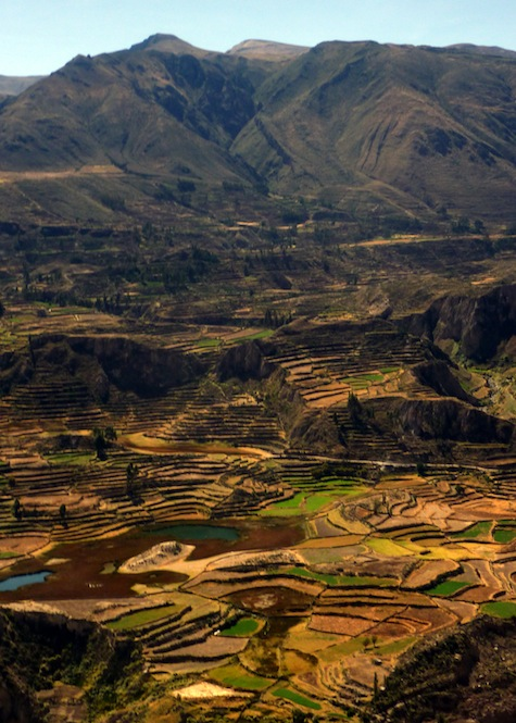 The Global Test:  Tall Tales from Colca Canyon, Peru - 2