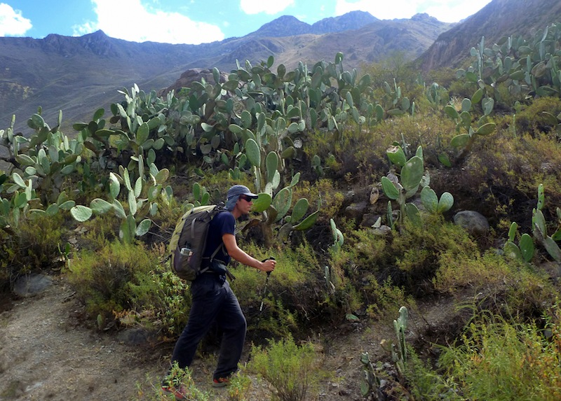 The Global Test:  Tall Tales from Colca Canyon, Peru - 6