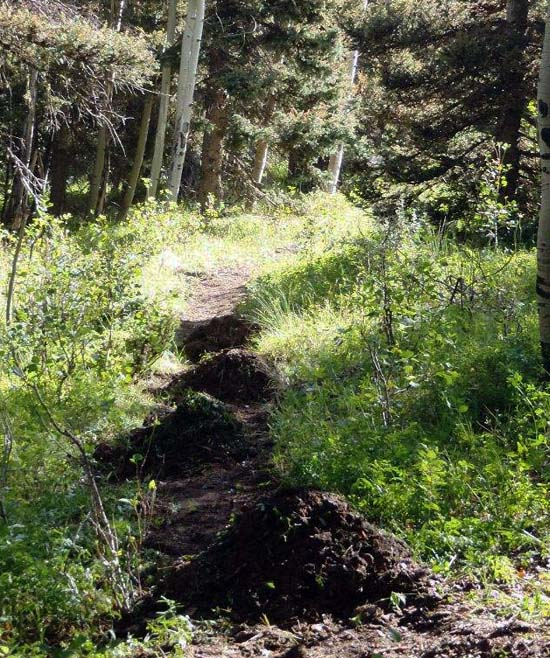 Continental Divide Trail Project Report: Hopewell Lake, NM, August 2011 - 7