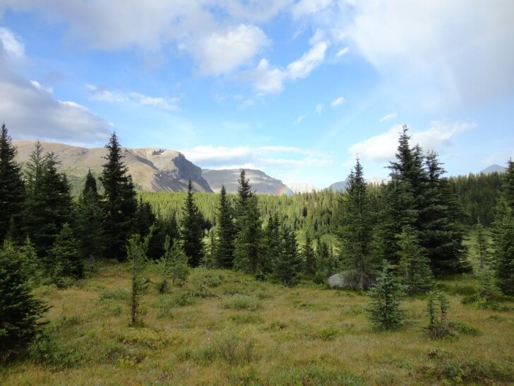 Sunshine on the Marvel Pass Backpacking Trail.