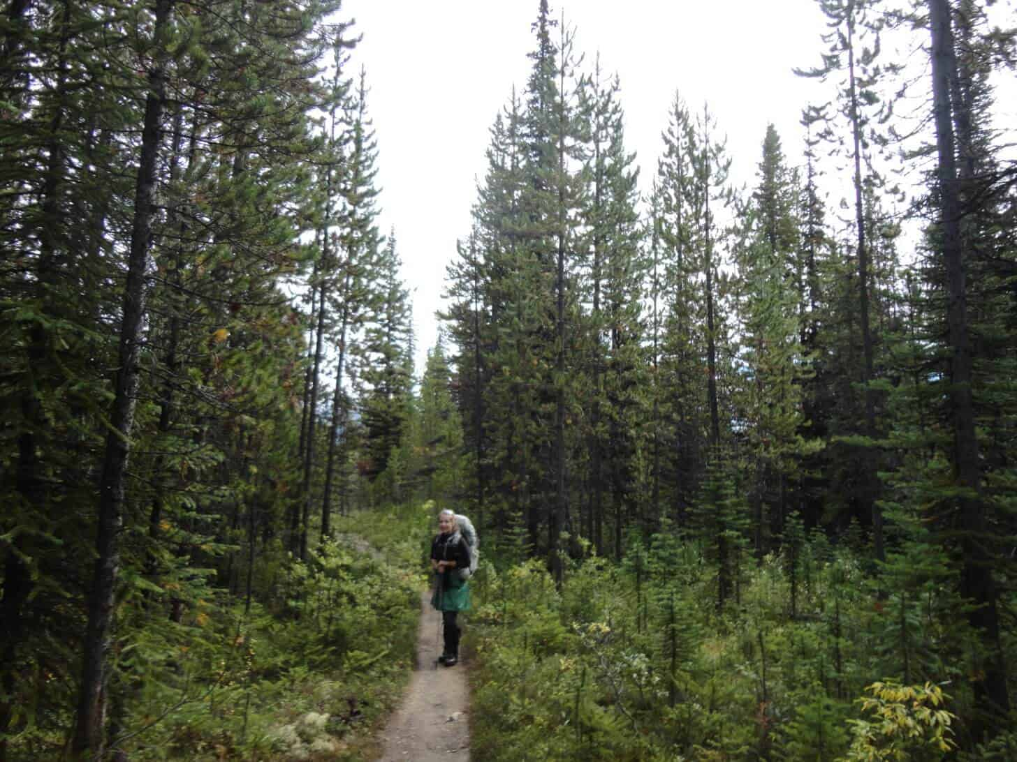 Skyline Trail: The Skyline Trail winds through the boreal forest, gradually gaining elevation.