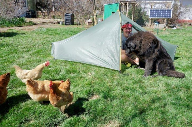 animal investigation 1