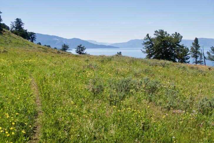 Hiking the Yellowstone Caldera Loop: Flower view of lake 1