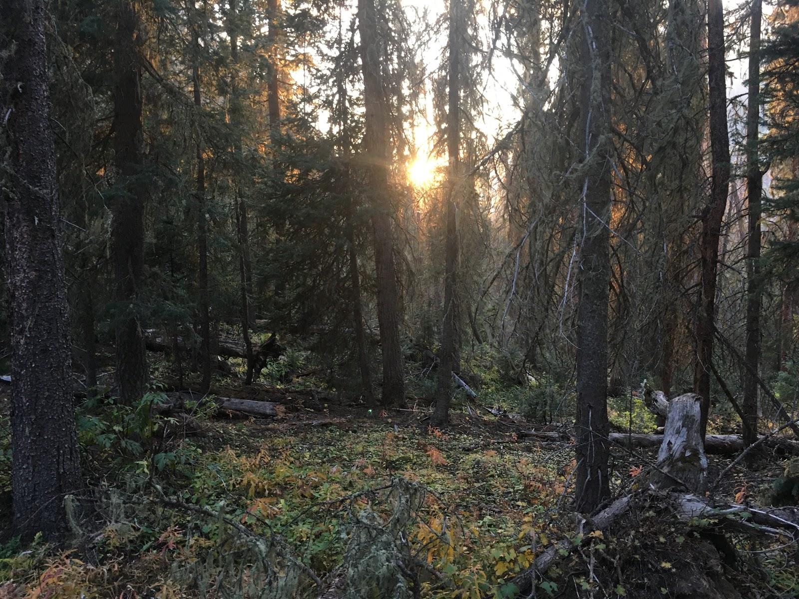 The sun setting in trees!