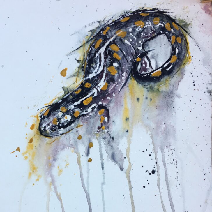 Spotted Salamander Painting by Andrew Marshall