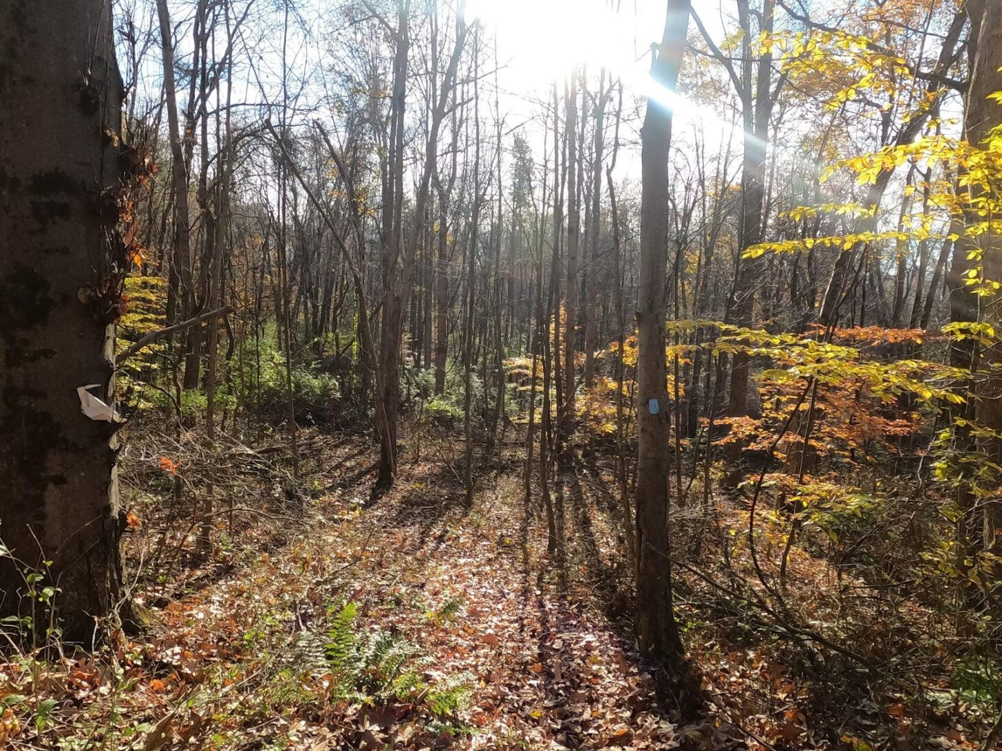 Late fall. A trail through the woods with a single blaze on a tree.
