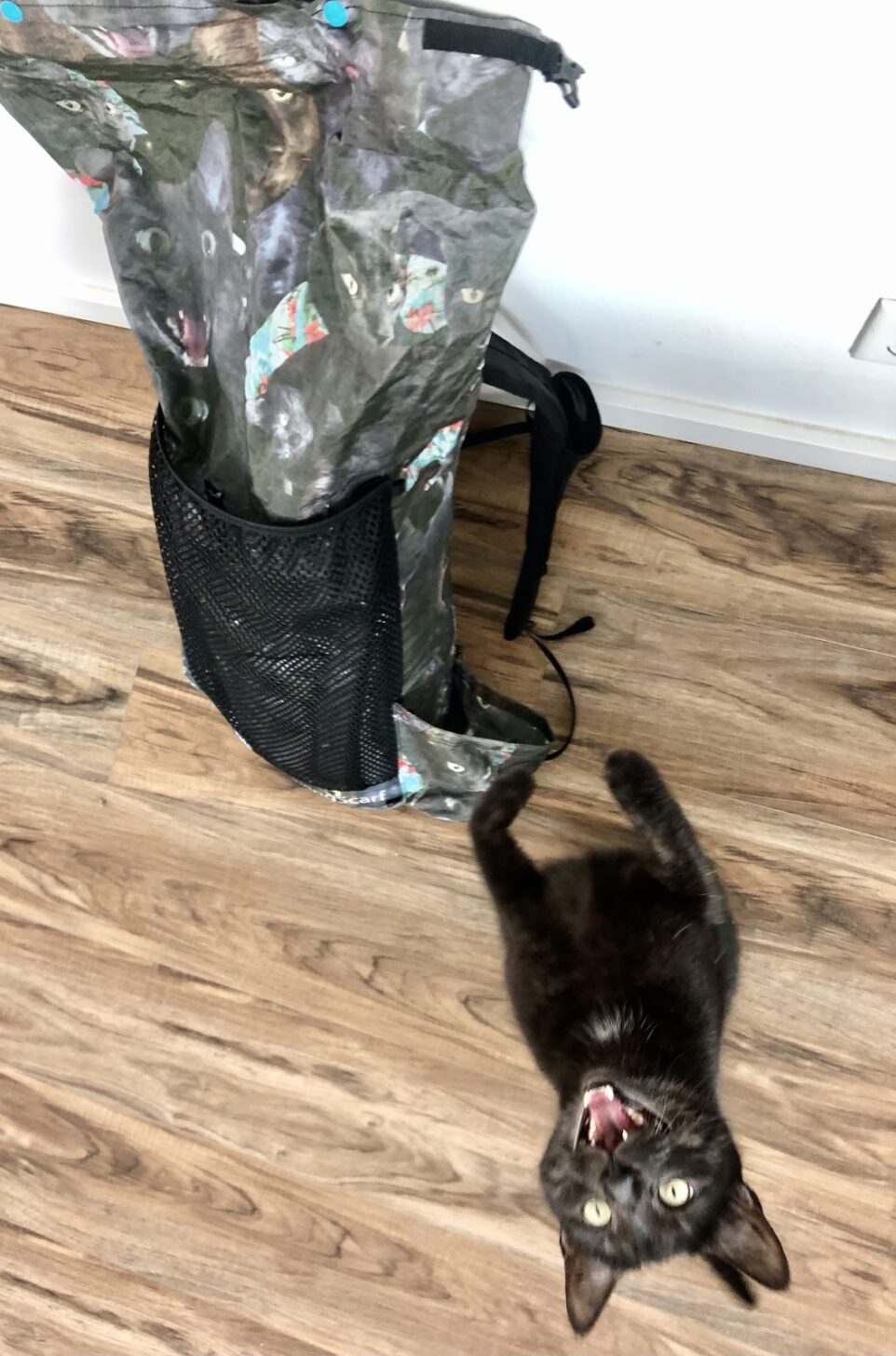 a cat screams at the camera. Next to the cat is a backpack with that cat's face on it.