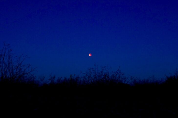 a red moon descends over a silhouette of desert plants