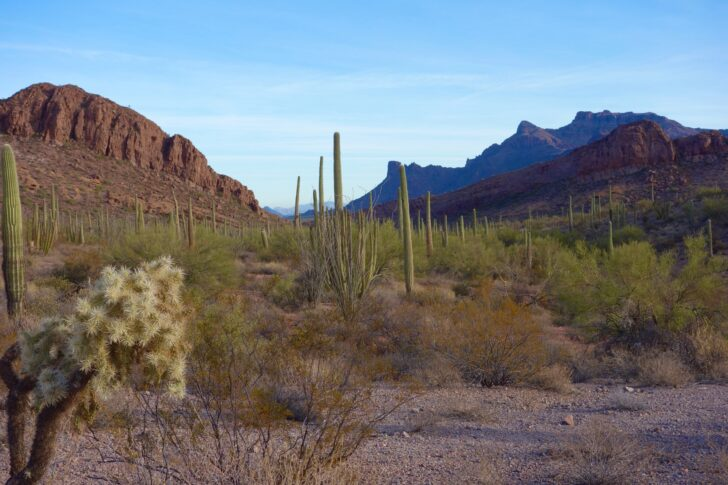 a desert landscape with cactus and rock formations