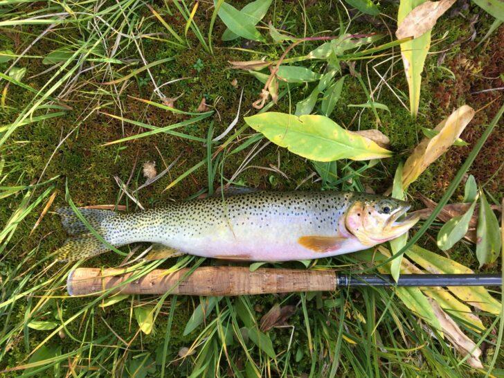 a beautiful trout next to a minimal tenkara style rod