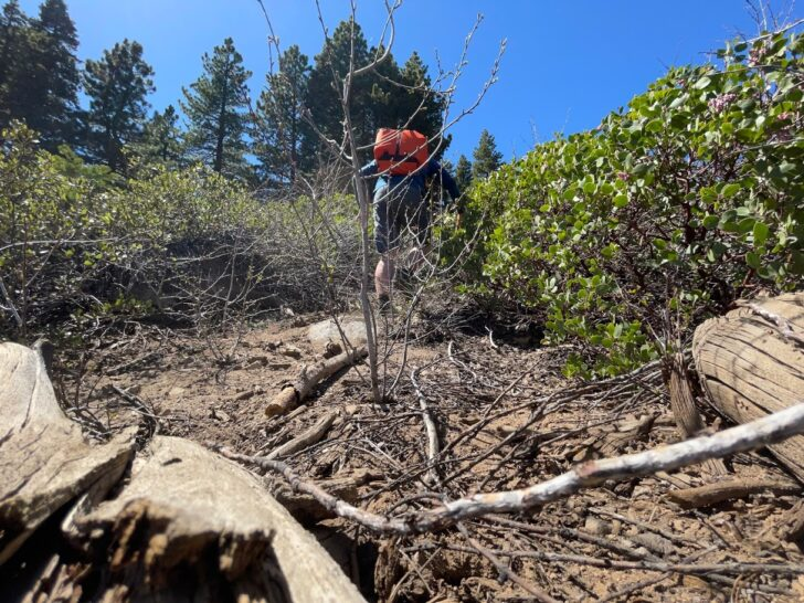 A man pushes through scrub and brush while wearing an orange backpack.
