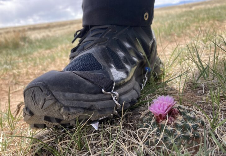 traction spikes on a trail running shoe next to a flowering cactus