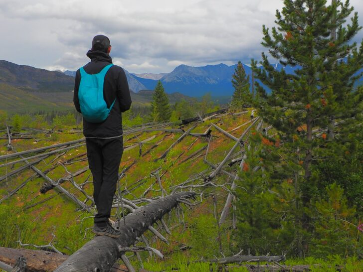 A man stands on a log looking out over a meadow.