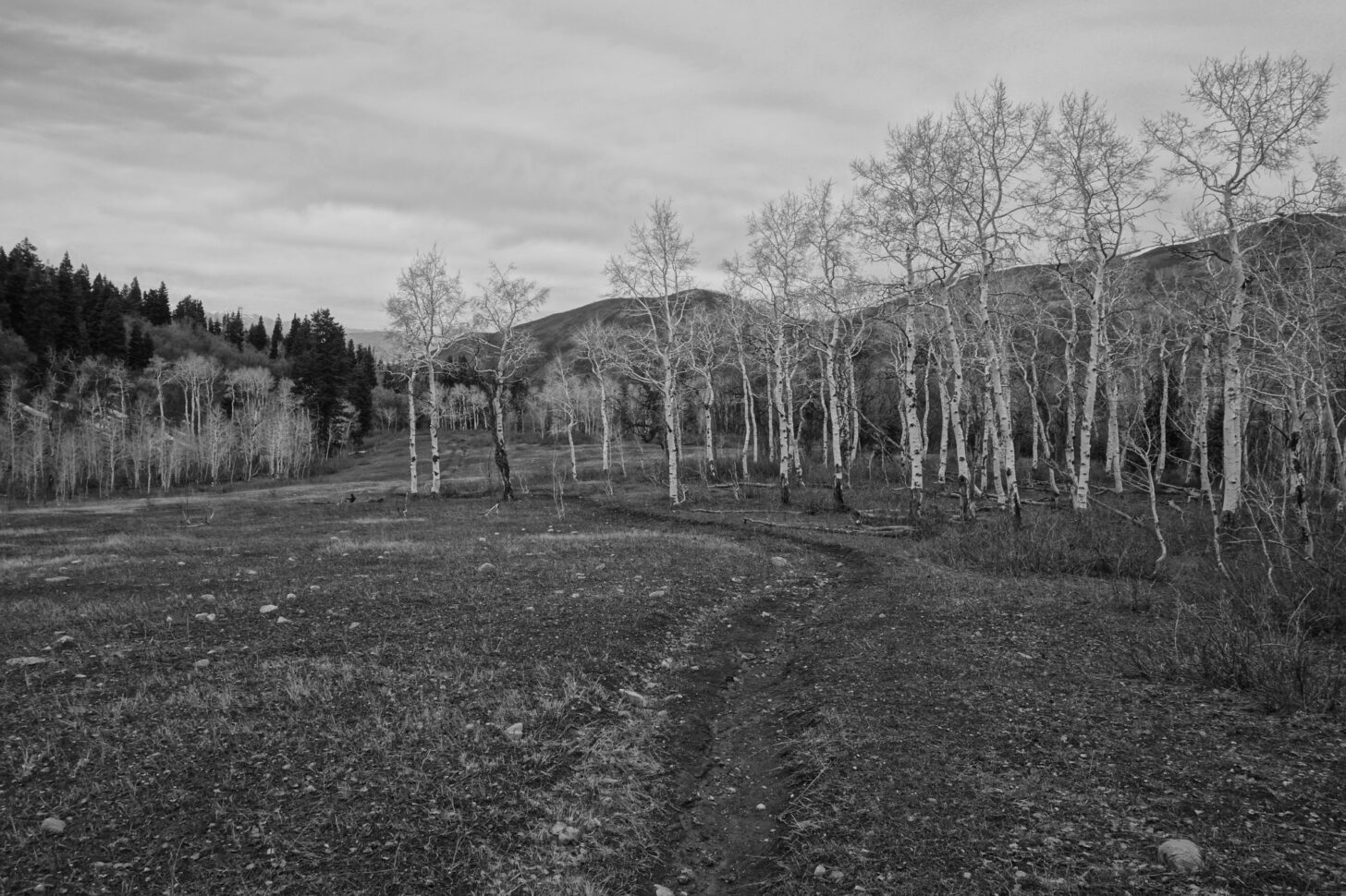 a black and white photo of bare trees with a path running through them.