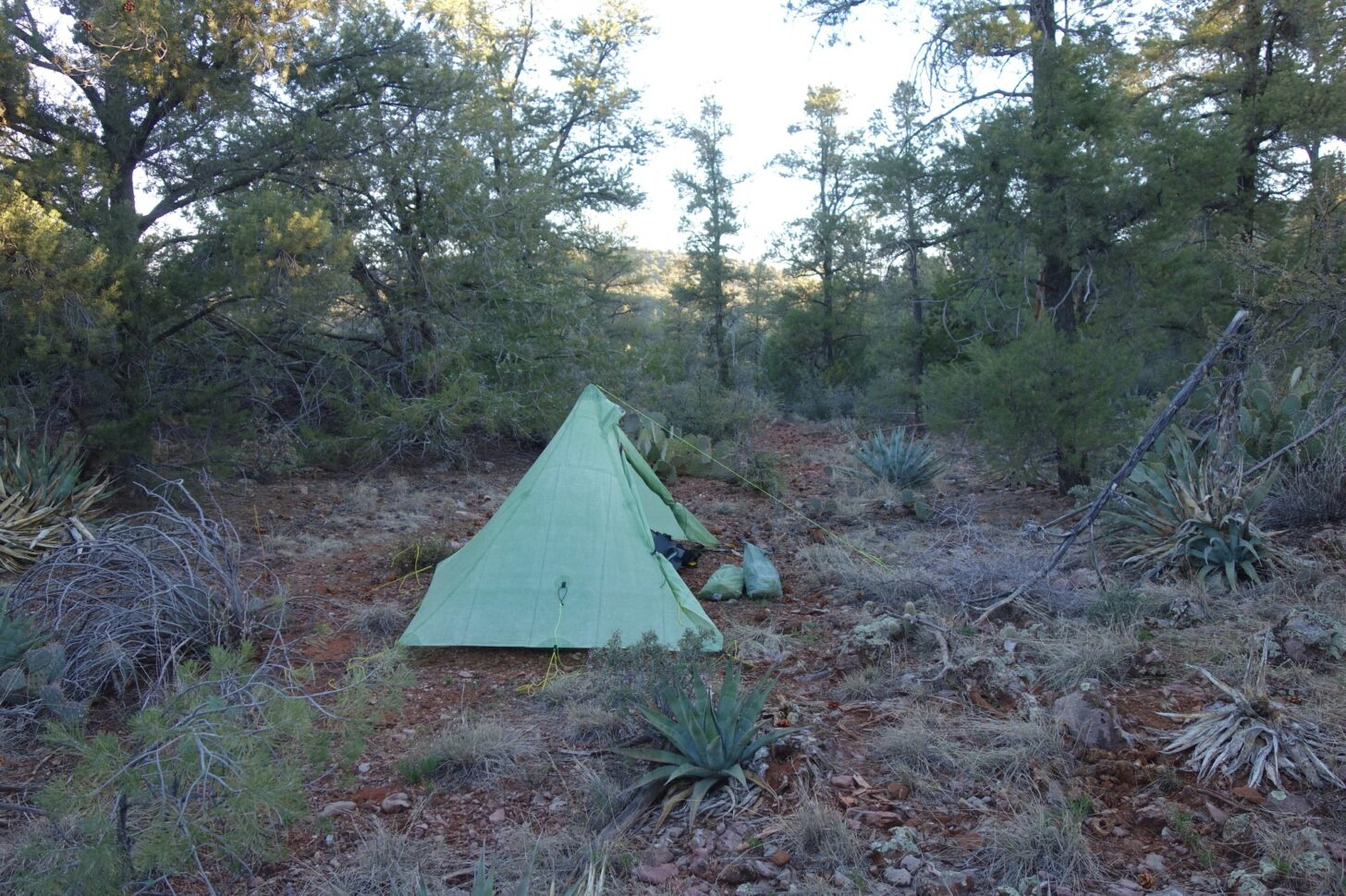 a pyramid style tent pitched under a small stand of trees.