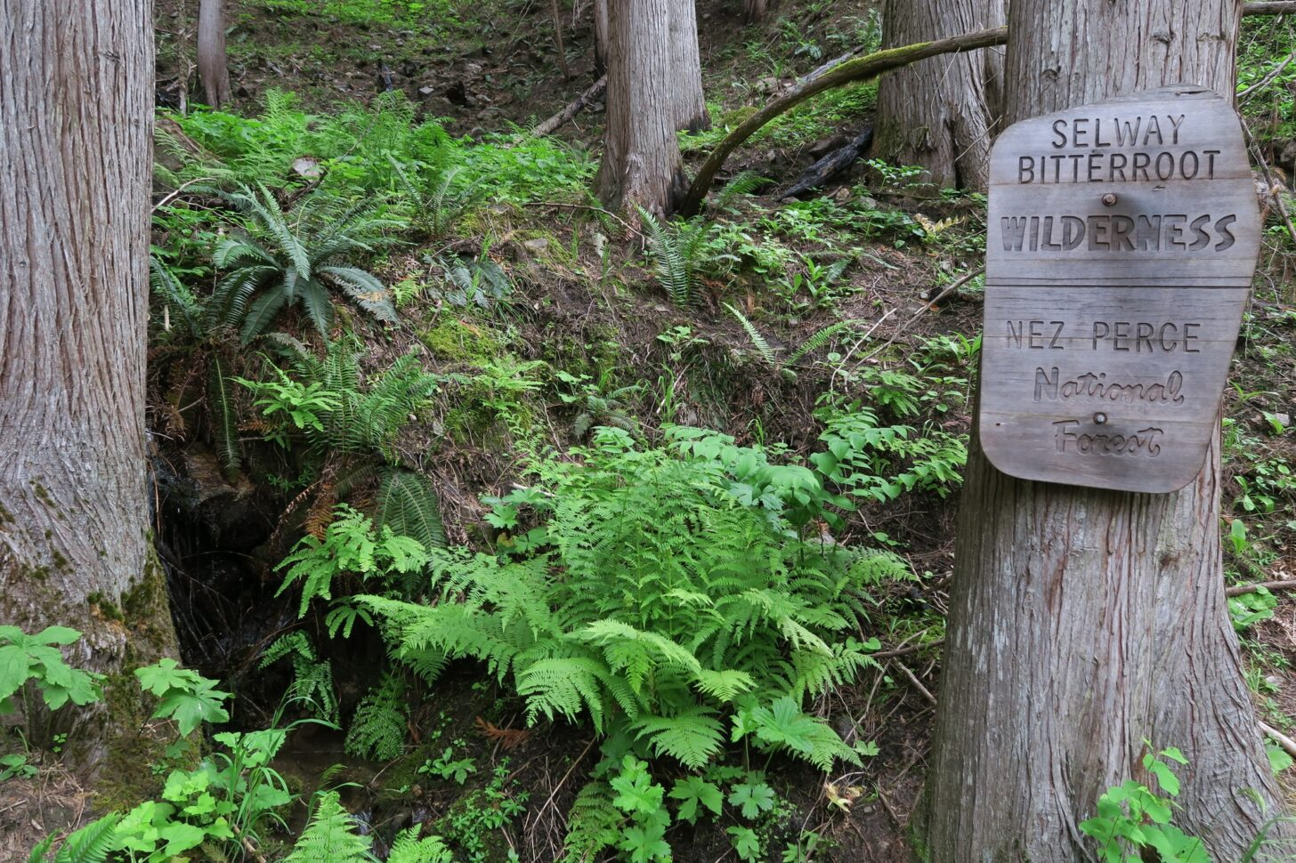 """a sign that reads """"Selway Bitterroot Wilderness, Nez Perce National Forest"""""""
