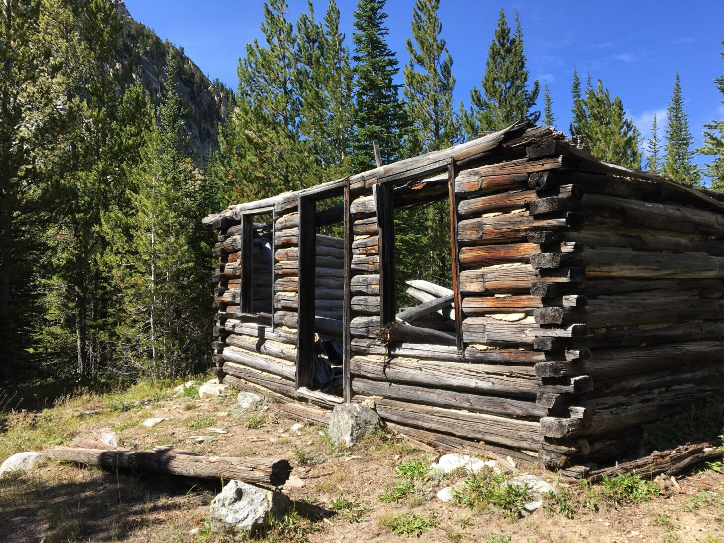 a ramshackle cabin surrounded by trees