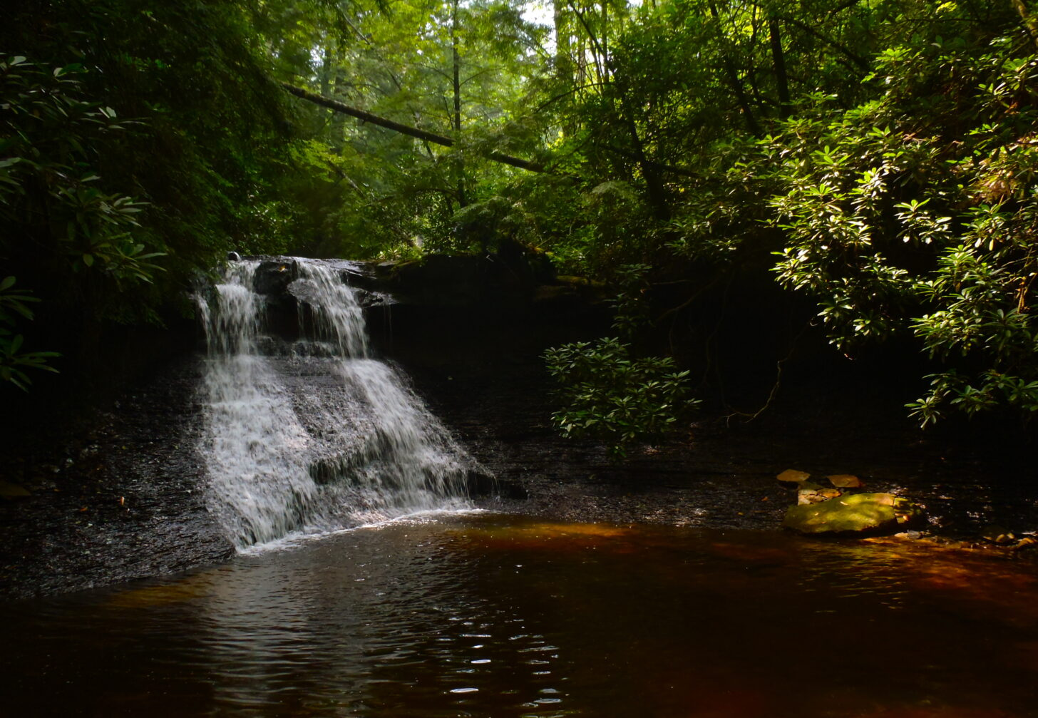 a lush waterfall surounded by green foilage.