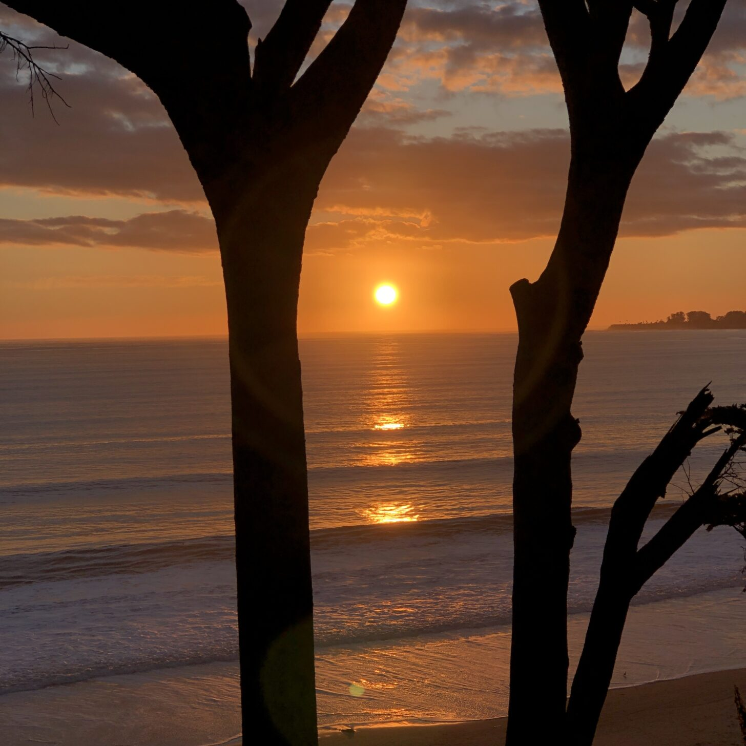 Image of the sun setting over the ocean with tree trunks and waves in the forground