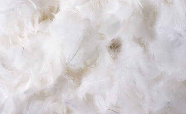 a pile of white feathers