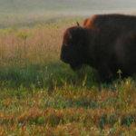 Profile picture of Tallgrass