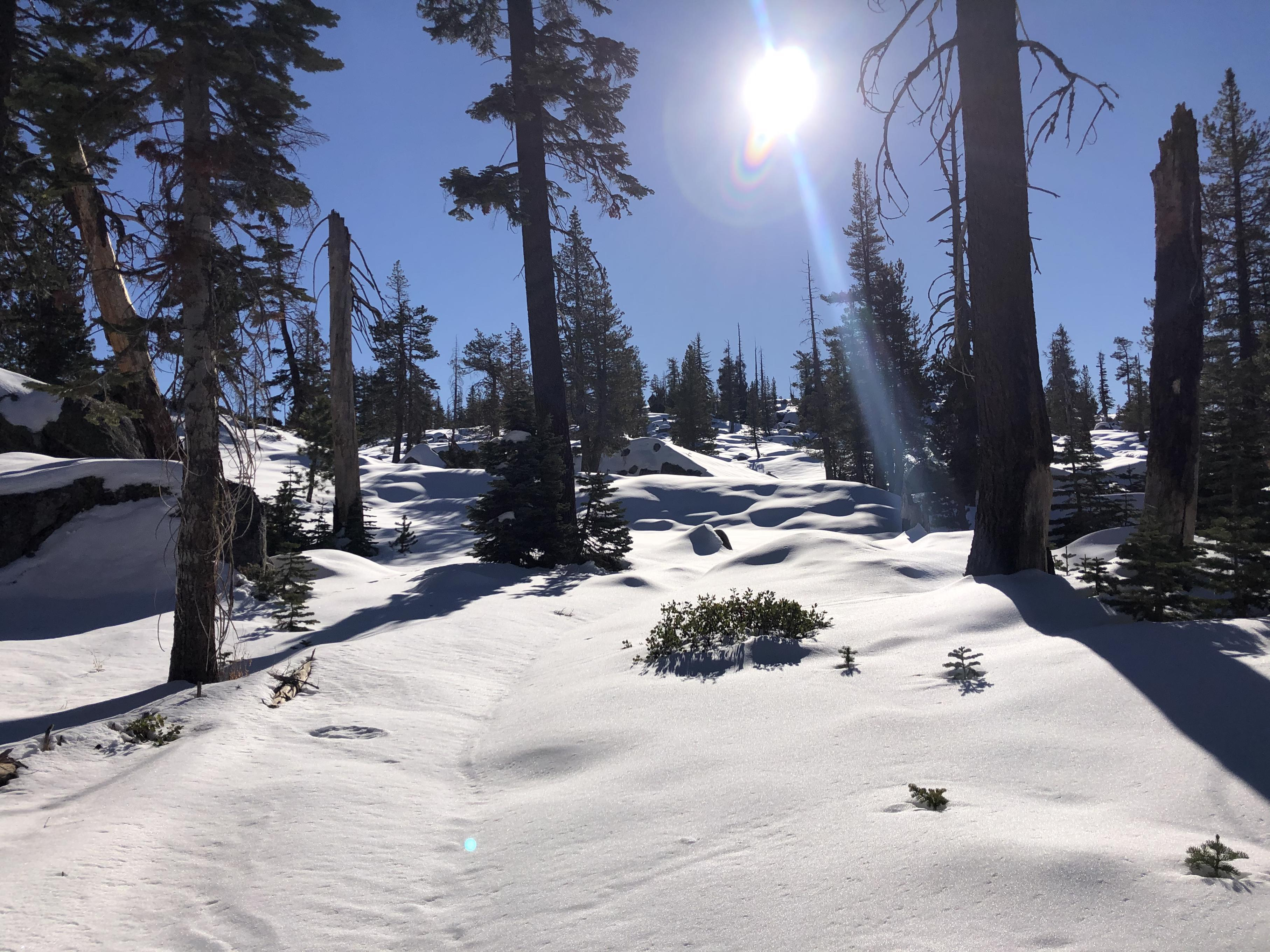 Emigrant Wilderness in the snow